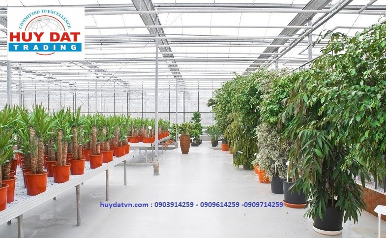 Tấm lợp Tileron -The Industrial hothouse, in which grow the decorative plants.